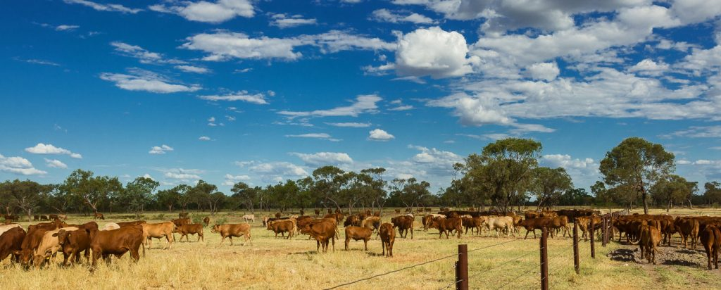 Alexandria - Cattle farm in Australia