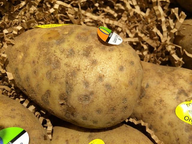 Potato Silver Scurf