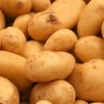 New GMO potatoes obtain approval for human consumption in 2017
