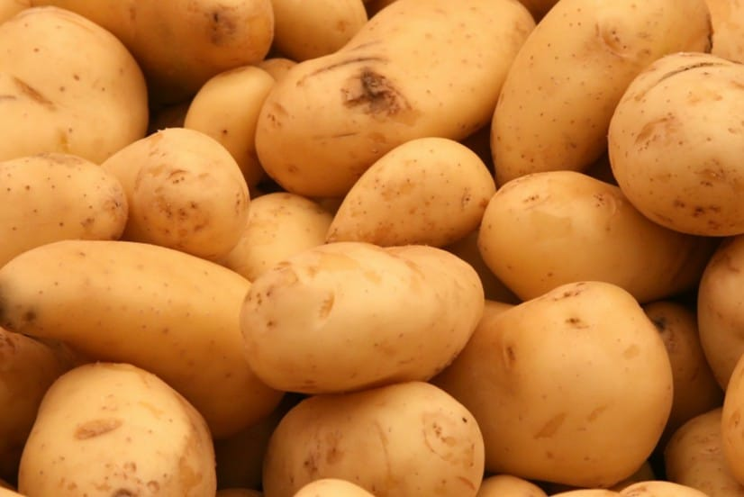 approved GMO potatoes