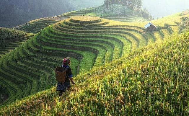 food crops China