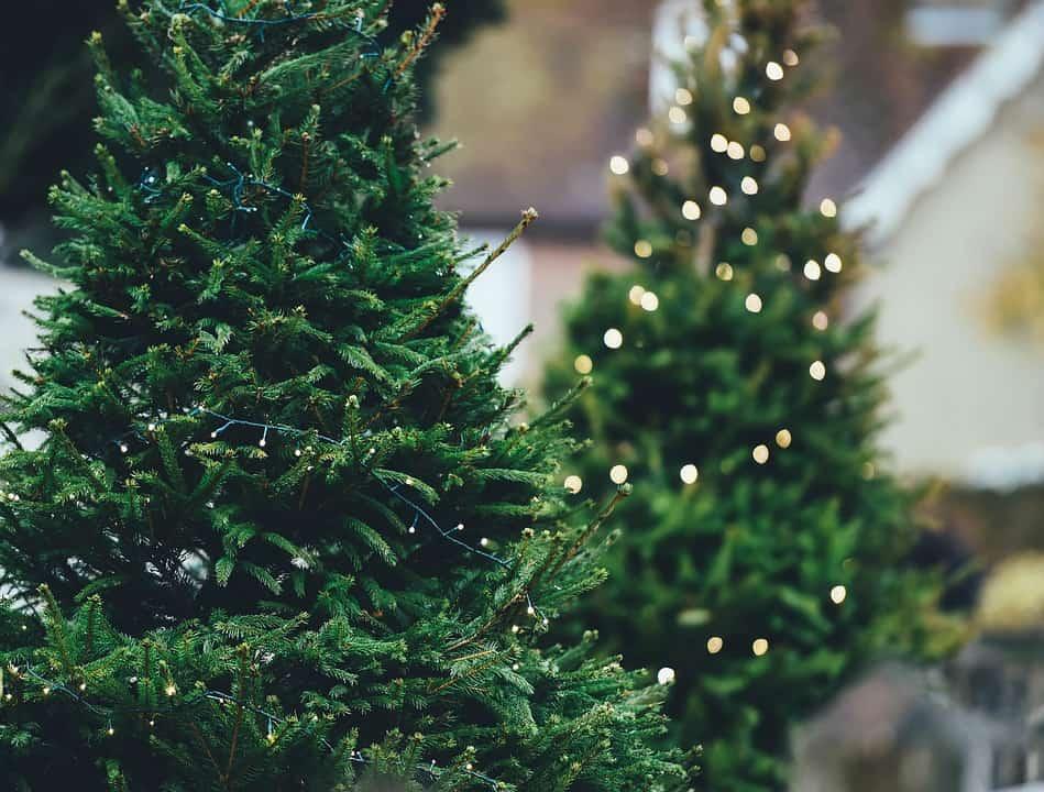 biggest christmas trees - Biggest Christmas Tree In The World