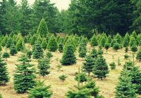 impact of Christmas trees