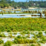 The economic benefits of algae farms