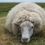 11 things to know about wool – types of wool
